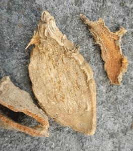 Shillong lakadong turmeric slice Rs. 175 Per Kg